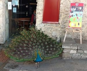 Lisbon with kids and peacock